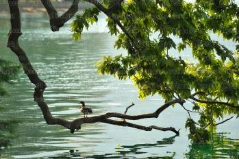 000319 Lago di Lugano